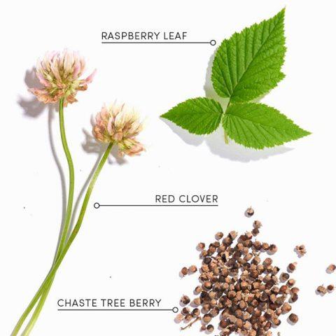 fertility | Organic Tea - Love Tea